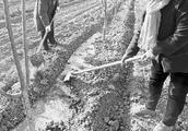 垣曲县鲁家坡村发展樱桃种植160亩