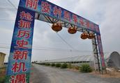 2018年码头镇第七届甜瓜旅游采摘节即将开幕