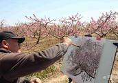 无棣十里河堤桃花吐蕊争艳 引画家写生千亩桃花林