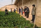 市农委督查红古区采摘园农产品质量安全