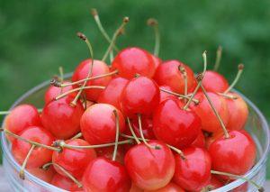 青岛樱桃采摘节的社会效益