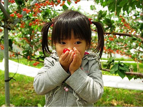 樱桃生长所需元素