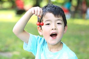 青岛樱桃果实的生长期