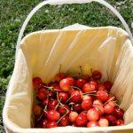 樱桃采摘节:深圳湾口岸进口加拿樱桃