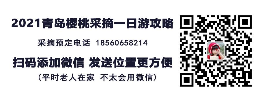 2021青岛樱桃采摘节攻略