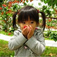 樱桃采摘节:教你挑选好吃的新鲜樱桃