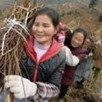 贵阳:特色农业助农增收