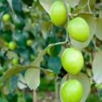 水果控们不可错过的四季生态采摘园!